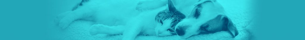 Teal Dog and Cat Sleeping Banner