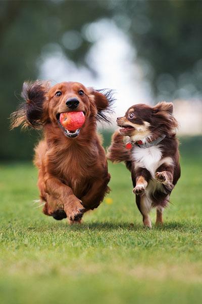 Dogs running through park